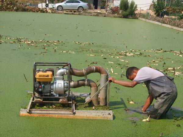 新款高效挖藕机系列 信阳新型大功率挖藕机 WOJ-002